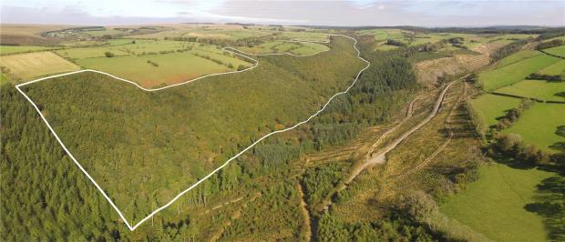 Woodland At Blaen-Hauliw, Pencader, Carmarthenshire